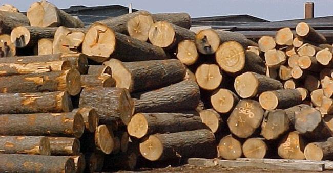 Xuất khẩu gỗ giúp Việt Nam giảm thâm hụt thương mại với Trung Quốc