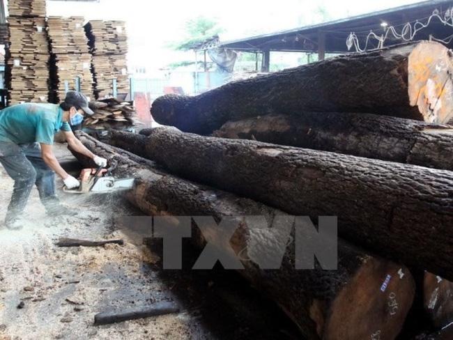 """Các hiệp hội Việt Nam chính thức nói """"không"""" với gỗ bất hợp pháp"""